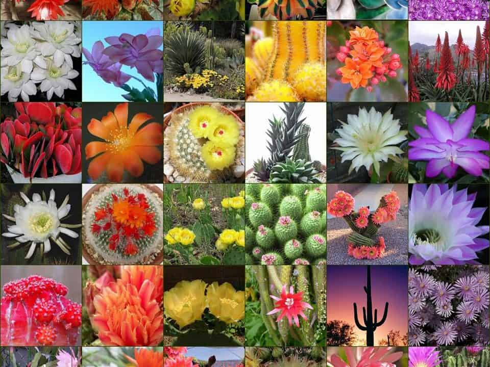 Arizona Cacti choices for your Garden