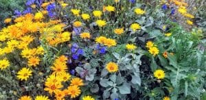 wild flowers in Sun City West
